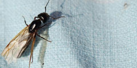 Seasonal Pest Control Tips From Ohio's Termite Treatment Company, Tate, Ohio