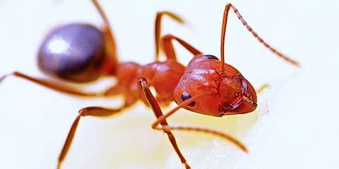 Save Yourself Time & Money by Hiring Wisconsin's Best Pest Services Provider, Fitchburg, Wisconsin