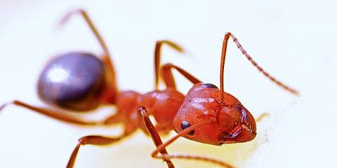 One-time Pest Treatments From Denning Pest Control, Jefferson City, Missouri