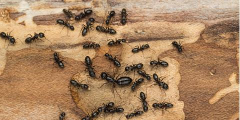 3 Tips for Keeping Carpenter Ants Out of Your Home, 2, Maryland