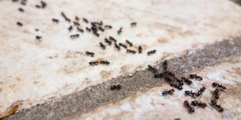 3 Steps to Take When Ants Invade Your Home, West Plains, Missouri