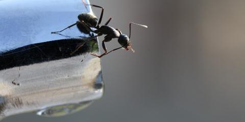 Get Rid of Ants: Tips & Insight From Cincinnati's Top Exterminator, Hebron, Kentucky