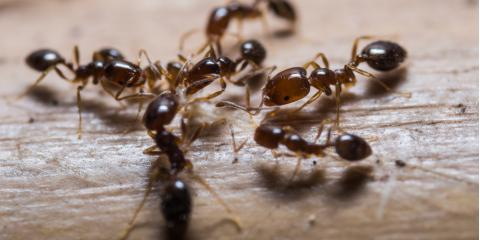 Ant Control Service Professionals Share 5 Tips for Preventing an Infestation, Lebanon, Kentucky