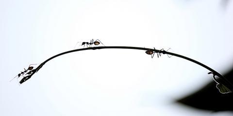 5 Pest Management Tips From Wahiawa's Pest Control Experts, Wahiawa, Hawaii