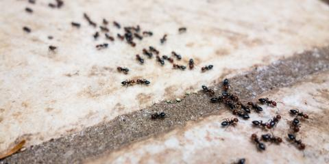 How to Treat an Ant Infestation, Mobile, Alabama