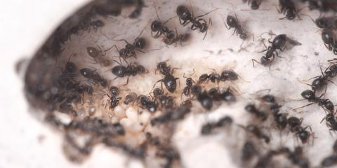 Ants 101: Call the Exterminator if You See These in Your ...
