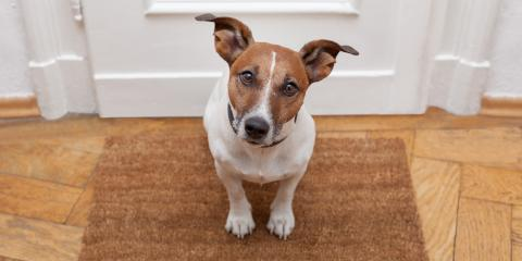 3 Easy Tips for Transitioning Your Pet Into a New Apartment Rental, Union Park, Florida