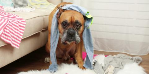 4 Do's & Don'ts of Maintaining a Pet-Friendly Apartment, Lexington-Fayette, Kentucky
