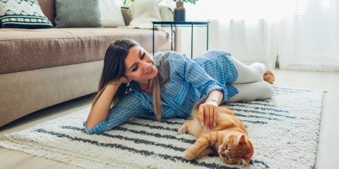 Why Cats Are the Perfect Pets for Apartments, Conway East, South Carolina