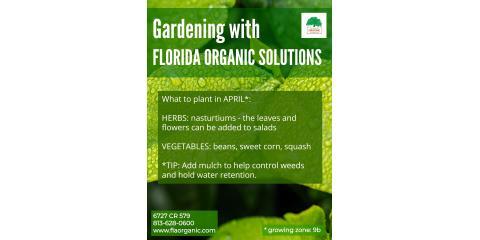 April Gardening, Brandon, Florida