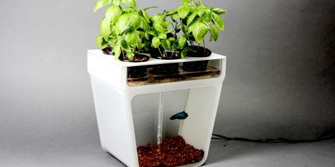 3 Benefits of Indoor Growing From Aurora's Gardening Experts, Aurora, Colorado