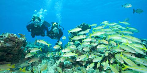 4 Tips For Your First Scuba Diving Trip, Key Largo, Florida