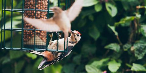 5 Surprising Benefits of Having Bird Feeders in Your Yard, Whiteville, Arkansas