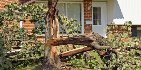 4 Helpful Tips for Emergency Tree Removal, Carter, Arkansas