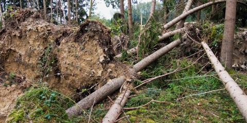 A Tree Service Offers 3 Tips to Help Plants Bounce Back From Bad Weather, Arpin, Wisconsin
