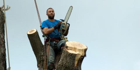 Arborist-Approved Tips for Handling a Dead Tree, North Huntingdon, Pennsylvania