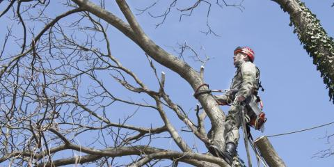Athens Arborist Shares the Dangers of DIY Tree Care, Jefferson, Georgia