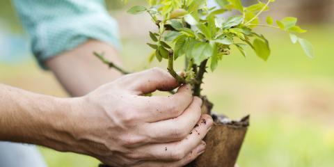 3 Ways an Arborist Can Spruce Up Your Yard, Hawthorne, Florida