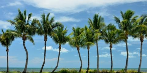 5 Best Trees to Grow in Florida, Hawthorne, Florida