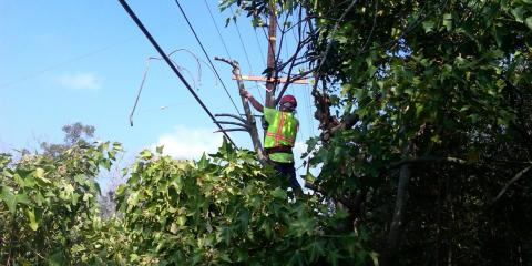 4 Ways an Arborist Can Help You, Hilo, Hawaii