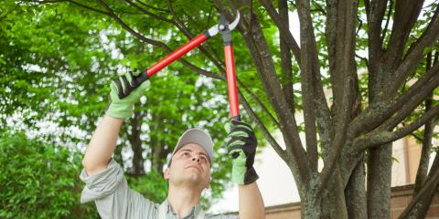 3 Jobs You Should Leave to a Certified Arborist, North Huntingdon, Pennsylvania