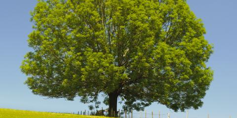 Signs of an Emerald Ash Borer Infestation & How to Stop It, North Huntingdon, Pennsylvania