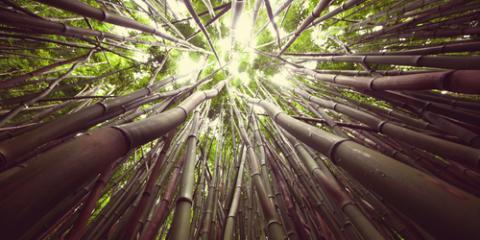 Hawaii Arborist Explains 3 Tree Diseases to Keep on Your Radar, Waimea, Hawaii