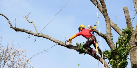 4 Questions to Ask an Arborist Before Hiring, Hilo, Hawaii