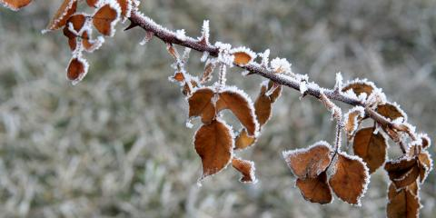 How to Protect Your Trees From Frost Heaving, St. Charles, Missouri
