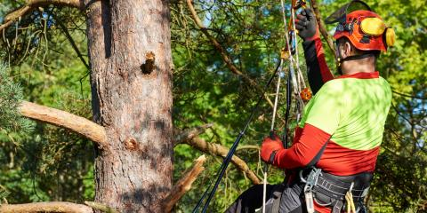 3 Factors to Know Before Hiring an Arborist, Guilford, Connecticut
