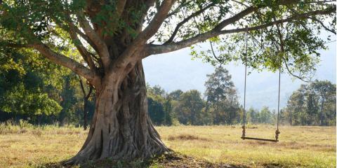 3 Symptoms of an Unhealthy Tree, Baldwin, Georgia