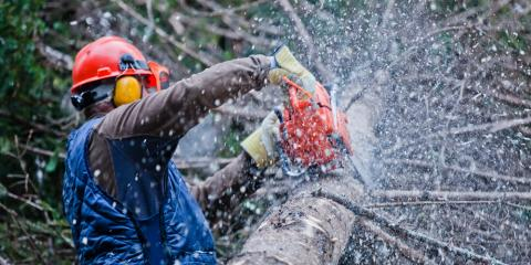 4 Common Tree Hazards Explained by Greater Rochester's Tree Care Experts, Macedon, New York