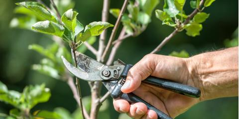 Top 3 Arborist-Approved Spring Tree Care & Maintenance Tips , Summerdale, Alabama