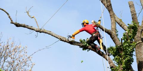 3 Signs You Need a Professional Tree Trimming Service, Brewster, New York