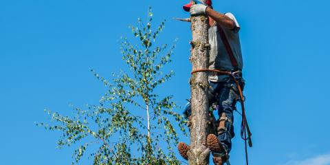 Lone Pine Tree Service, Tree Service, Services, Valley Springs, California
