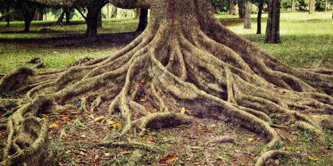 An Arborist on How to Stop Tree Roots From Sprouting in Your Yard, Midland City, Alabama