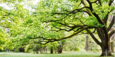 5 Arborist-Approved Tips for Keeping Your Trees Healthy, West Columbia-Cayce, South Carolina