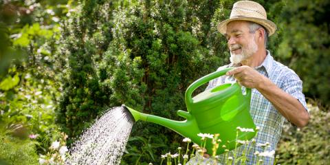 Tree & Shrub Care: 5 Tips to Keep Yours Healthy, Owings Mills, Maryland