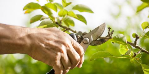 4 Mistakes to Avoid When You Prune Trees, Owings Mills, Maryland