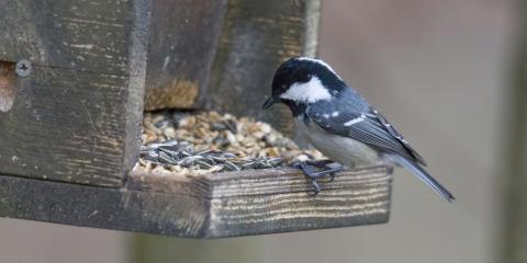 The Do's & Don'ts of Bird Feeding, Whiteville, Arkansas