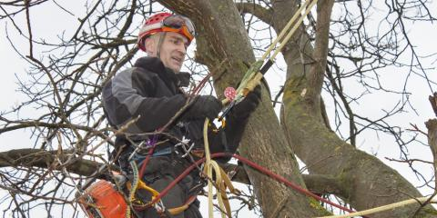 What to Ask Your Tree Service When Creating an Estimate, Carter, Arkansas