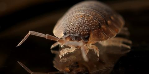 Can a pest control company get rid of bed bugs?, Mobile, Alabama