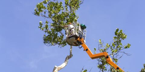 3 Reasons to Skip the DIY Approach & Hire a Professional Tree Service , Arpin, Wisconsin