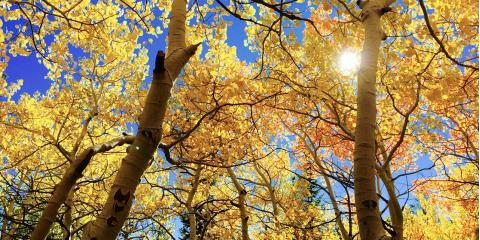 Improve Your Property's Appearance & Safety With an Expert Tree Service, Arpin, Wisconsin