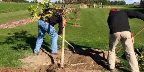 3 Ways a Tree Service Can Help Improve Your Lawn, Arpin, Wisconsin