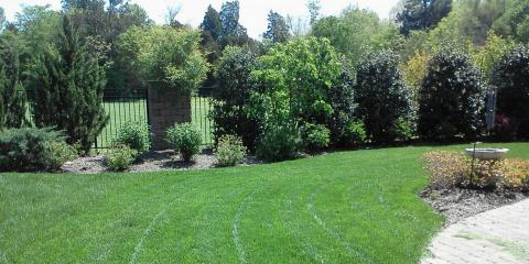 Lawn Care Services Provider's Top 3 Tree Diseases to Monitor, Asheboro, North Carolina