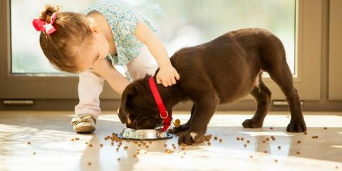 What to Look for in Your Pet's Food, Ashland, Missouri