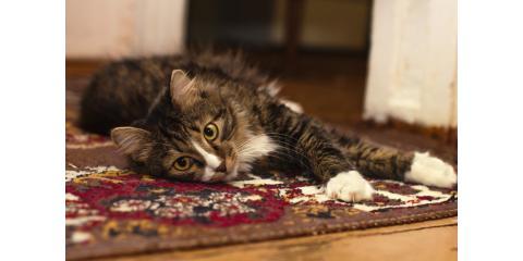How Often Should You Do Floor & Carpet Cleaning?, Ashtabula, Ohio