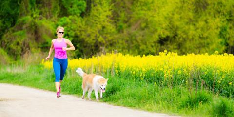 3 Pet Safety Tips for Walking on Hot Asphalt, Wasilla, Alaska