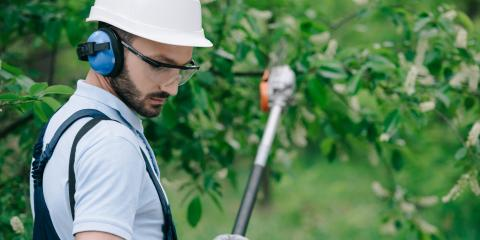 5 Reasons to Leave Tree Trimming to Professionals, Jefferson, Georgia